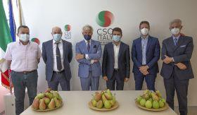 New consortium to rescue Italian pear trade
