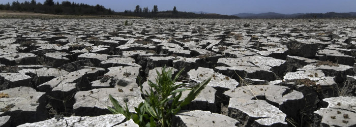 Chile drought: fruit crops under threat