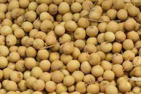 Support for Cambodian longan growers