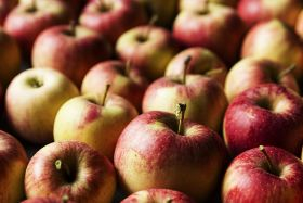 Genesis Fresh expects apple excellence
