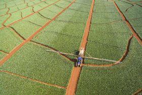 Del Monte releases sustainability report