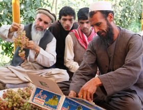 Afghanistan's fresh fruit exporters search for solutions