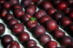 Japan beckons for US plums