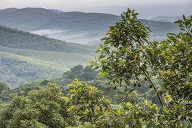 Westfalia achieves carbon milestone