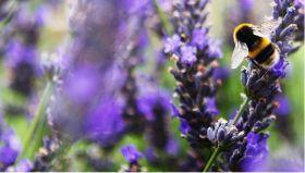 Organic September makes record start