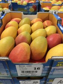 Future of new mango varieties resolved