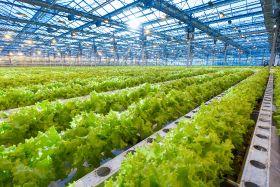 ADQ unveils UAE farming hub