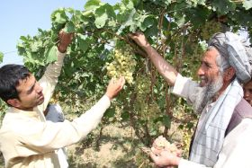 Afghanistan's fresh produce trade resumes