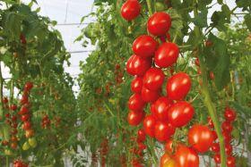 Bayer expands organic seed range