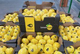 High hopes for seedless lemons