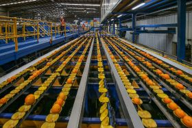 Citrus Australia to lead traceability project