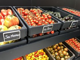 Hoogstraten targets UK growth in tomatoes