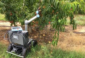 Robots trialled in US peach tree management