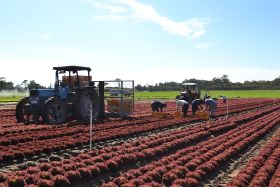 New R&D initiative to power Australian vegetable growers