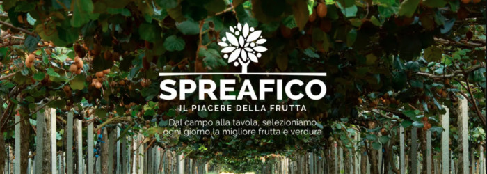 Spreafico under fire amid investigation into illegal workers