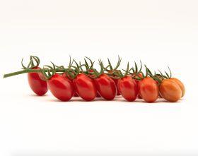 Top Seeds launches Fanello tomato