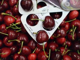 More US cherries fail Taiwan tests