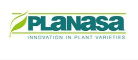 Planasa acquires Morocco's Maamora Prim