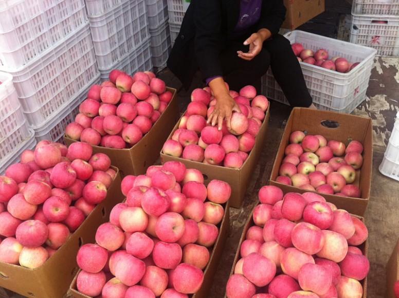 Выращивание яблок в 14