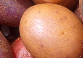 Potatoes NZ withdraws request for AU access