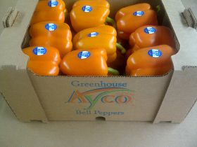 Ayco launches greenhouse range