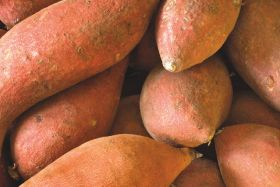 Europe hungry for US sweet potatoes