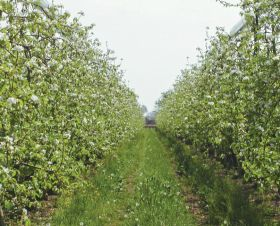 Short crop suits French growers