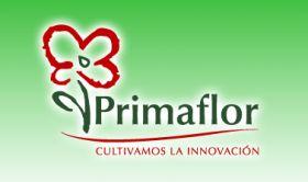 Primaflor takes GlobalGAP membership