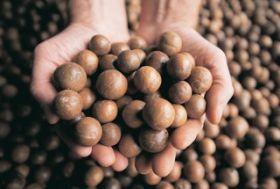 Australian nut promotion in Taiwan