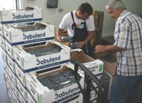 Serbia blueberry exports top US$1m