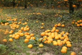 Uruguay declares agriculture emergency