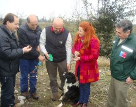 Chile targets truffle exports