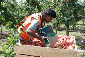 Labour shortage looms in NZ