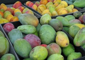 Solid performance for Mexican mangoes