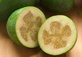 Pest problem for NZ feijoas