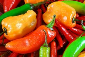Sales growth tipped for Peru peppers