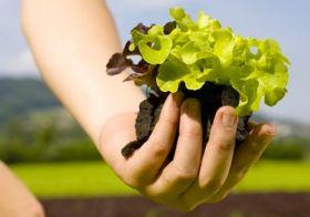 Salad companies form partnership