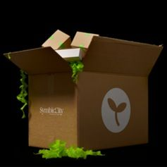 SymbioCity promotes urban agriculture