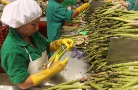 Peru enjoys asparagus recovery