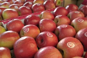 Australian apple exports on the rise