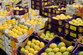Australian mangoes set for US trials