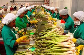 Improvement for Peru asparagus