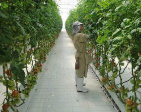 Del Monte opens Guatemalan facility
