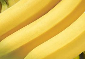 Haitian organic bananas arrive in Europe