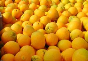 Mixed year for South African citrus