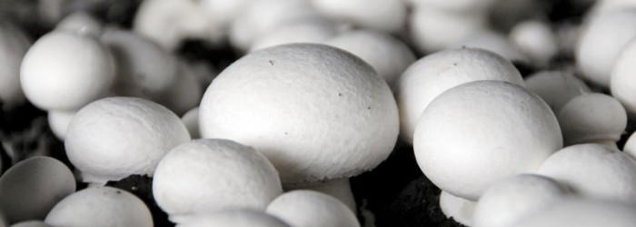 Death at mushroom processing plant