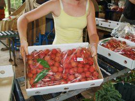 Tough season for Australian lychees