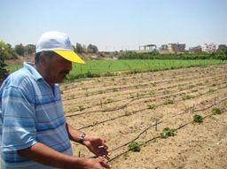 Palestinian farmers eye opening