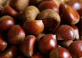 Growth opportunities for Aus hazelnuts