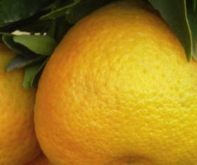 Seven Seas looks to Moroccan clementines